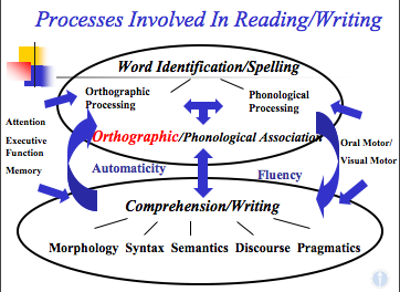 Hook Model of Processes Involved in Reading and Writing, including phonology, vocabulary, grammar (which encompasses morphology, syntax, and phonology, often complemented by phonetics, semantics, and pragmatics), and discourse